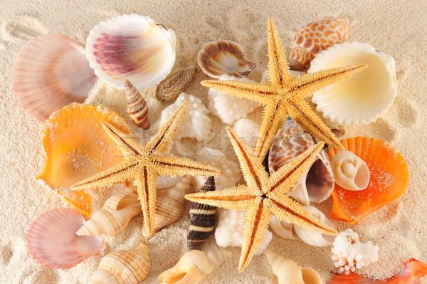 Conchiglie gruppo spiaggia mare sfondo estate Foto d'archivio © raywoo