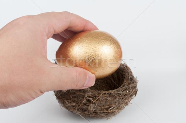 金の卵 巣 鳥の巣 卵 金 将来 ストックフォト © raywoo