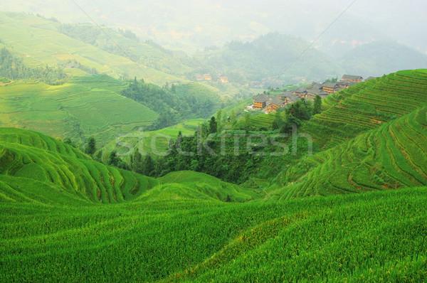 Kínai zöld rizsföld textúra épület háttér Stock fotó © raywoo