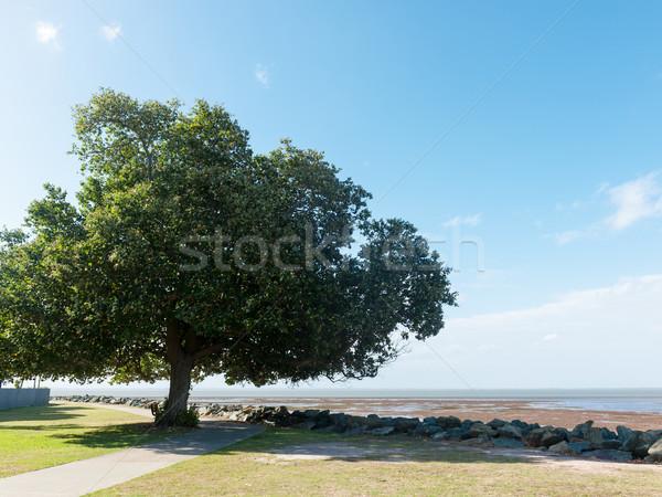 ツリー ビーチ ビッグ 緑の木 海 夏 ストックフォト © raywoo