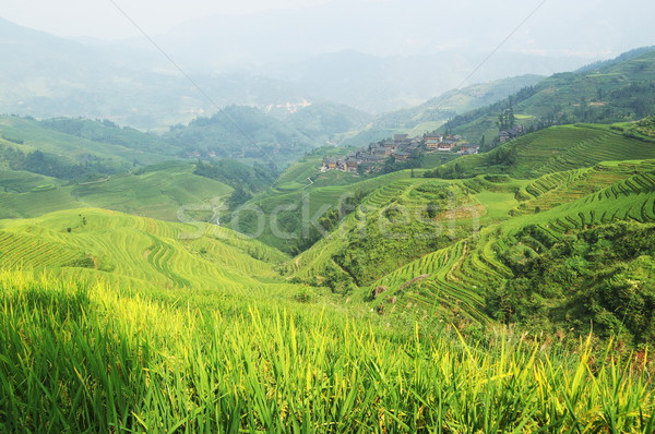 Chinese groene rijstveld textuur gebouw achtergrond Stockfoto © raywoo