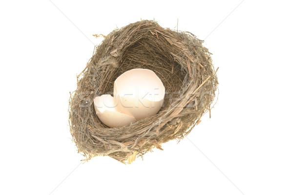 鳥の巣 壊れた 卵 シェル 孤立した 白 ストックフォト © raywoo