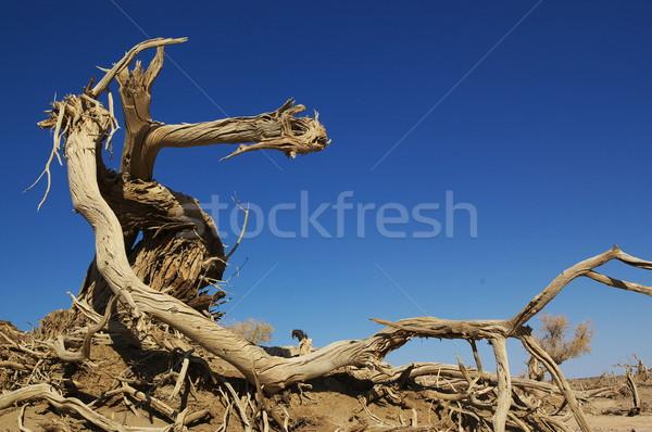 Toter Baum Wüste China Natur blau Reise Stock foto © raywoo