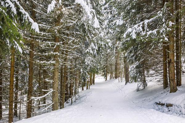 Winter Footpath Stock photo © RazvanPhotography