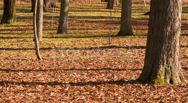 Abstract fall park Stock photo © RazvanPhotography