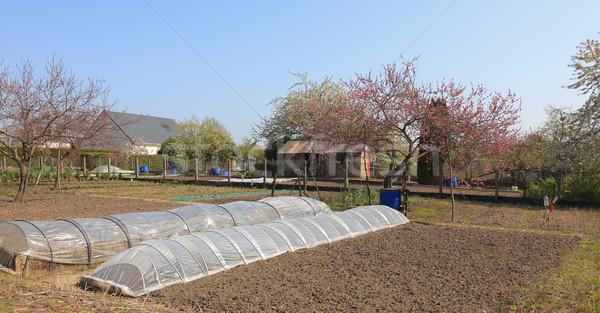 Tavasz kert zöldség kettő udvar házak Stock fotó © RazvanPhotography