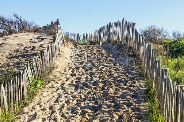 Stock photo: Footpath on the Atlantic Dune in Brittany