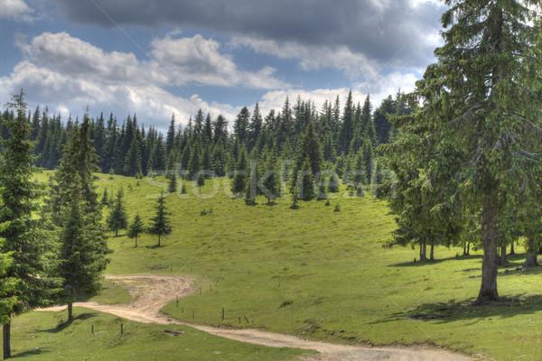 Hiking footpath Stock photo © RazvanPhotography
