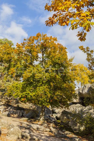 Foto stock: Otono · escena · forestales · hermosa · caída · paisaje
