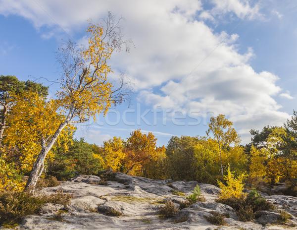 Lasu piękna jesienią krajobraz Francja blisko Zdjęcia stock © RazvanPhotography