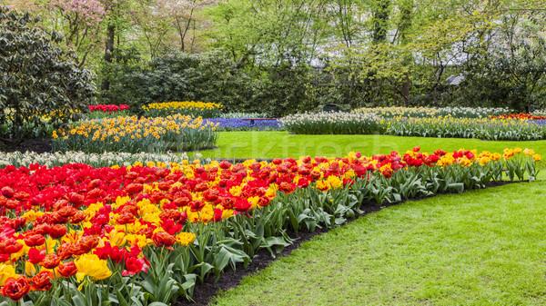 Foto stock: Flores · jardim · parque · primavera · fundo