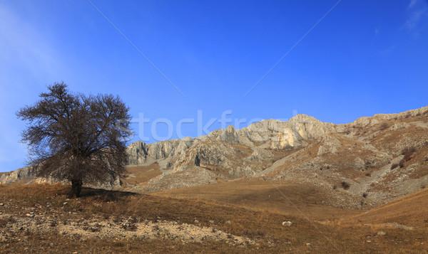Сток-фото: пейзаж · дерево · весны · фон · красоту · путешествия