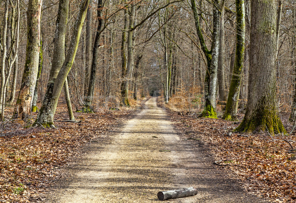Footpath in a Forest Stock photo © RazvanPhotography
