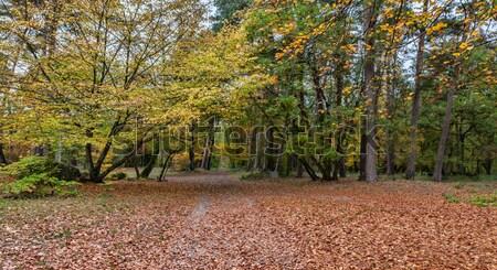 Autumn Path Stock photo © RazvanPhotography