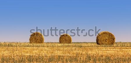乾草 3  フィールド 夏 食品 自然 ストックフォト © RazvanPhotography