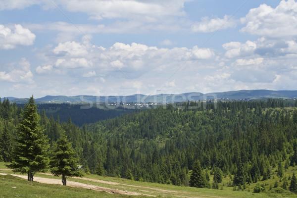 Forest landscape Stock photo © RazvanPhotography