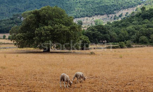 Mallorca Scenery Stock photo © RazvanPhotography