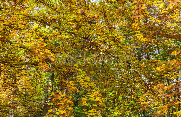 Detail in a Yellow Autumn Forest Stock photo © RazvanPhotography
