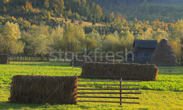 Landscape in Bucovina,Romania Stock photo © RazvanPhotography