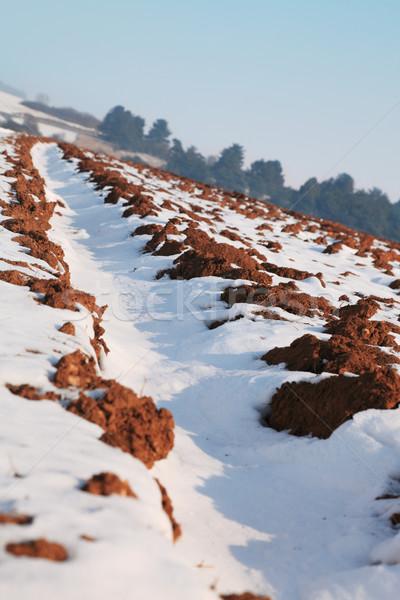 Field in winter Stock photo © RazvanPhotography