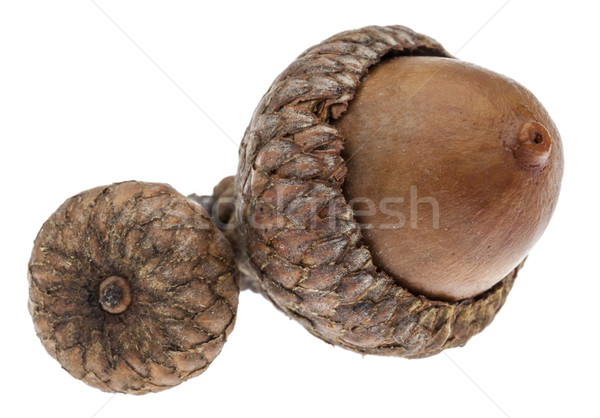 Twin Acorns Stock photo © RazvanPhotography
