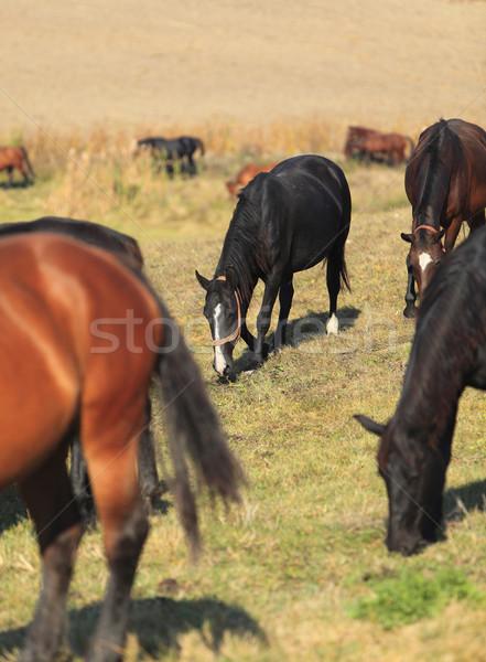 At içinde görüntü odak ikinci Stok fotoğraf © RazvanPhotography