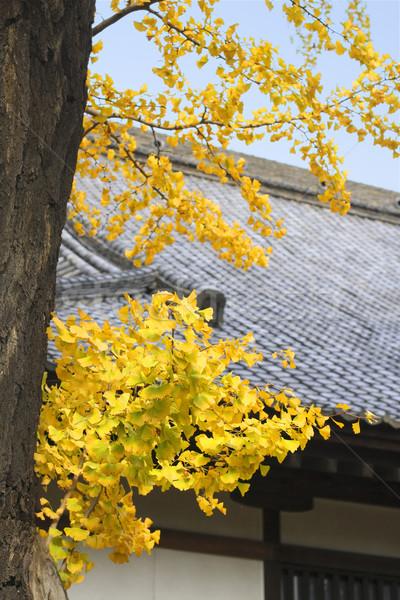 Autumn Japanese temple roof Stock photo © RazvanPhotography