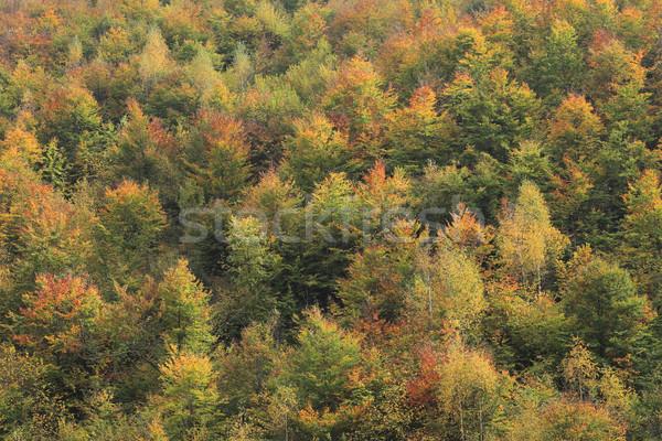 Autumn forest Stock photo © RazvanPhotography