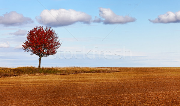 Autumn solitude Stock photo © RazvanPhotography