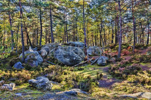 Outono cena floresta belo cair paisagem Foto stock © RazvanPhotography