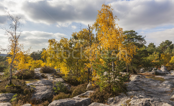 Autumn in Fontanebleau Forest Stock photo © RazvanPhotography