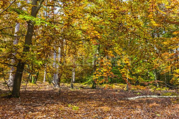 Foto stock: Amarillo · otono · forestales · imagen · hermosa · fondo