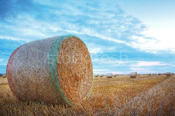 Széna kép mező nap természet farm Stock fotó © RazvanPhotography