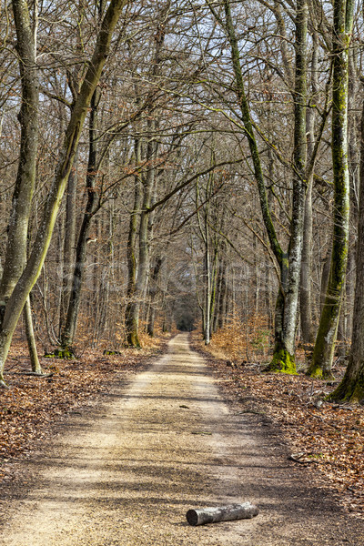 Stock photo: Footpath in a Forest
