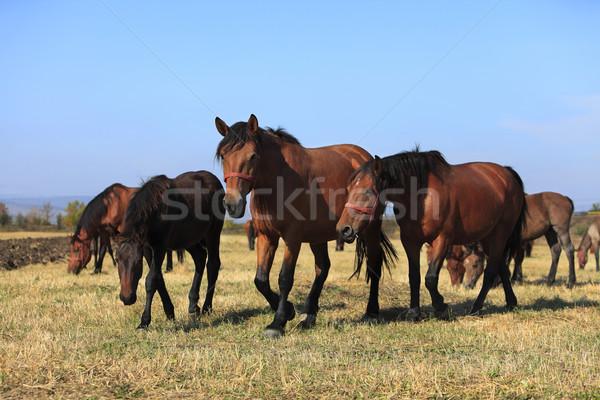 Atlar grup içinde aile güzellik Stok fotoğraf © RazvanPhotography