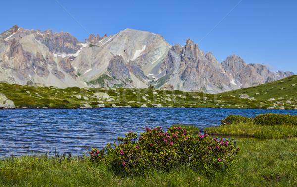 élevé altitude lac fleurs nature Photo stock © RazvanPhotography