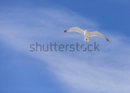 Sirály repülés felhős égbolt copy space természet Stock fotó © RazvanPhotography