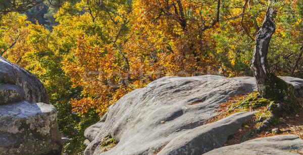 Najaar scène bos mooie vallen landschap Stockfoto © RazvanPhotography