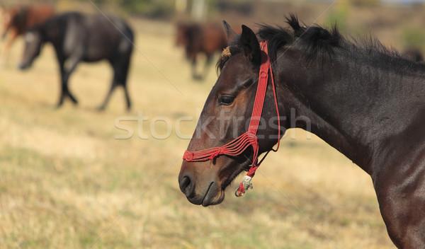 Profile of a horse Stock photo © RazvanPhotography