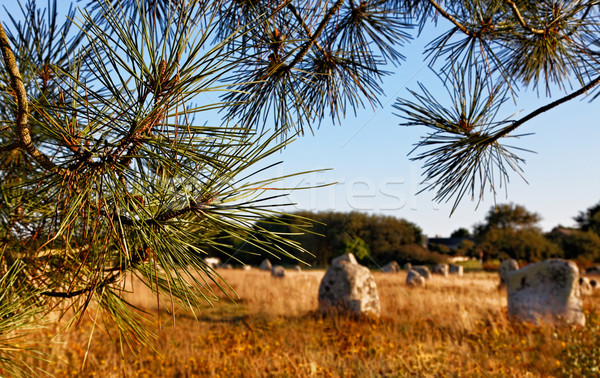 Landscape in Carnac Stock photo © RazvanPhotography