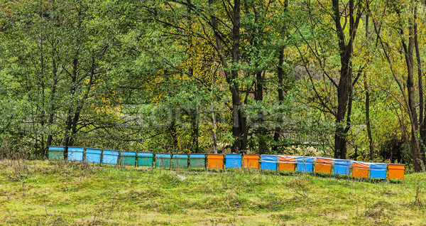 Beehives Stock photo © RazvanPhotography