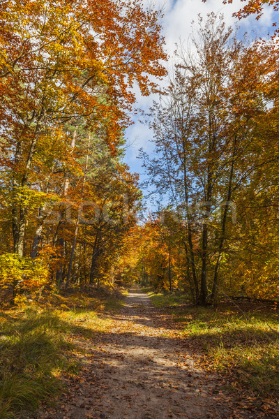 Stock photo: Footpath in a Forest in Autumn