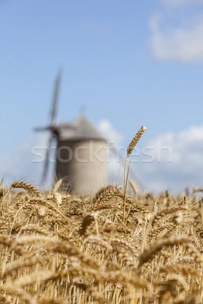 Filed of Cereals Stock photo © RazvanPhotography