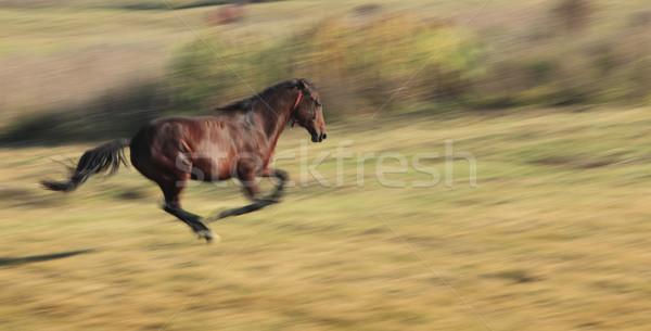 Stockfoto: Paard · lopen · afbeelding · vallen · paarden · ras