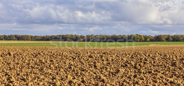 Autumn Landscape in a Field Stock photo © RazvanPhotography
