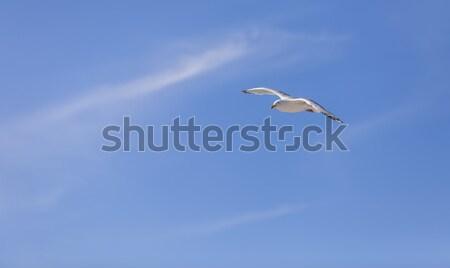 Zeemeeuw vliegen bewolkt hemel exemplaar ruimte natuur Stockfoto © RazvanPhotography