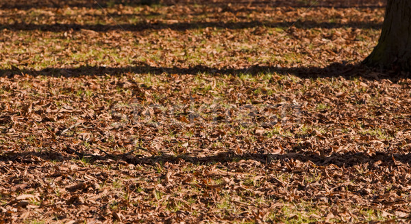 Fall shadows Stock photo © RazvanPhotography