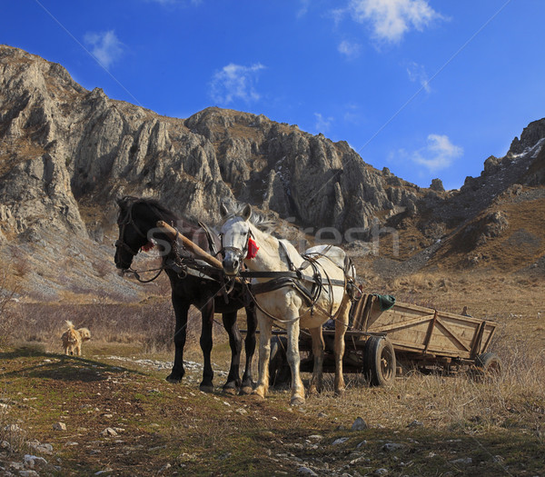 Horses and mountains Stock photo © RazvanPhotography