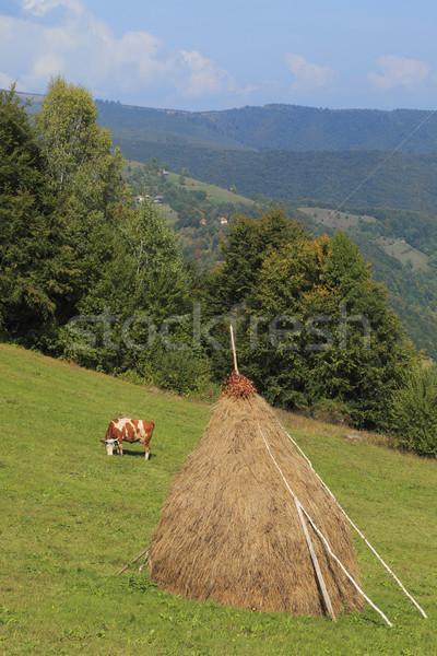 Landscape Stock photo © RazvanPhotography