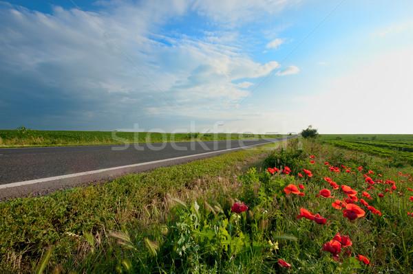 empty road Stock photo © razvanphotos